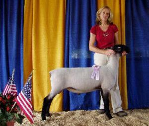 Vorac-0645-Lefty,-MD-State-Champ-Suffolk-Ram,-late-jr-ram-lamb-350x296