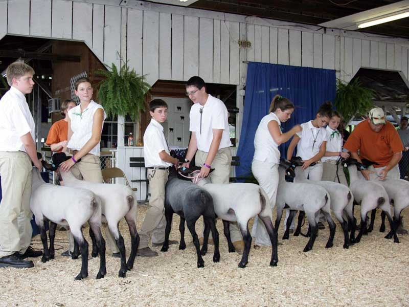2008-Montgomery-Co-4-H-Pairs-Class,-Elsa-Friis-on-left